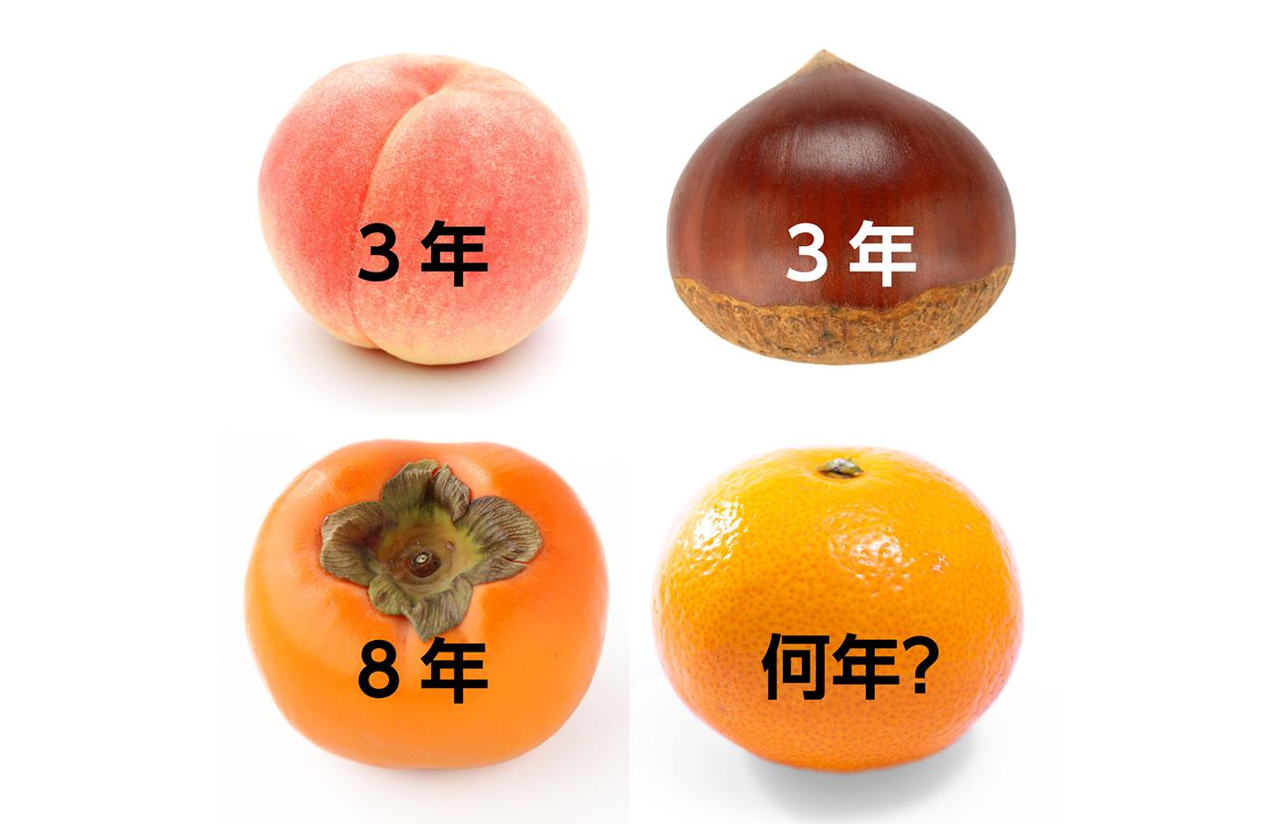 桃栗三年柿八年 みかんは何年?