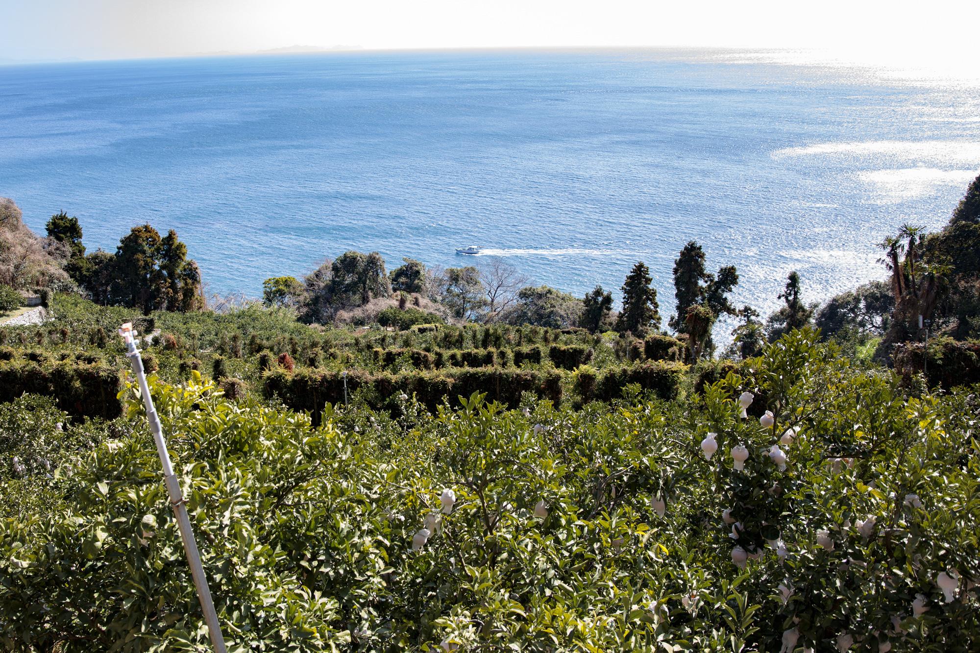 佐田岬半島の日当たりの良い場所