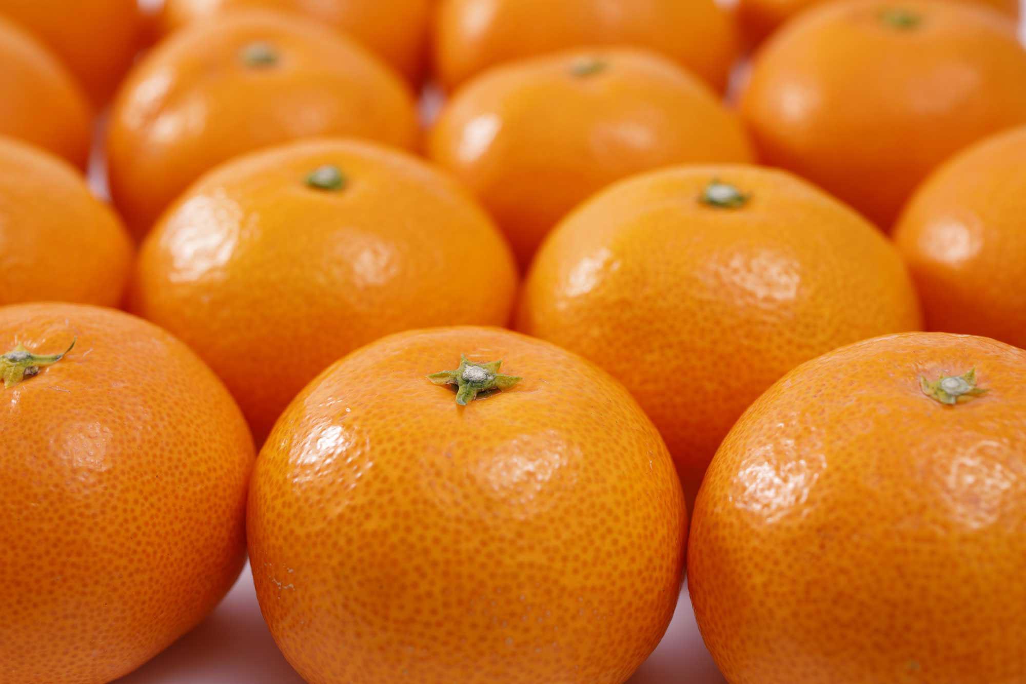 日本の柑橘史