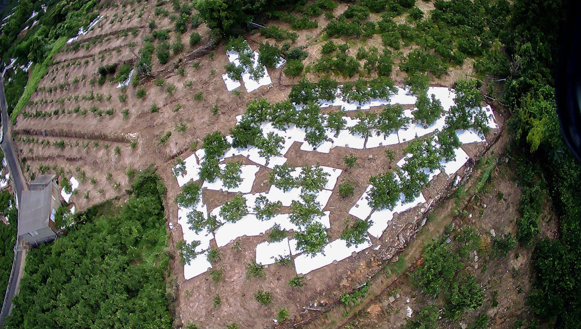 ゆったりとした農園。左上は、育成中の若木の畑。